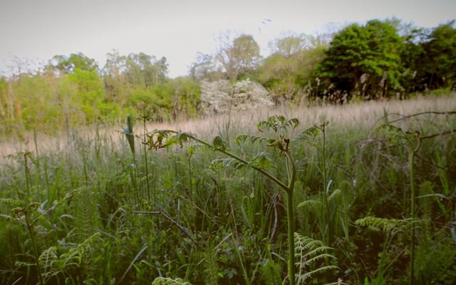 Photo of the Marley Fen peatland