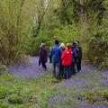 A group of people gathered within the woods, standing surrounded by bluebells