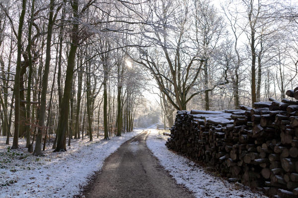 Photo of a pile of logs next to a track amid a snow-covered Wytham Woods landscape