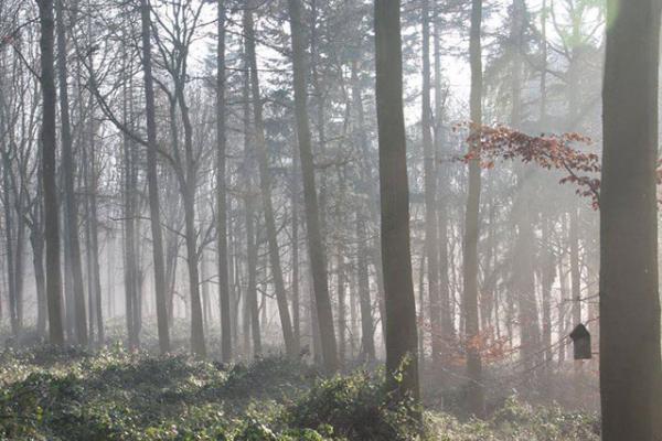 Wytham Woods Walk