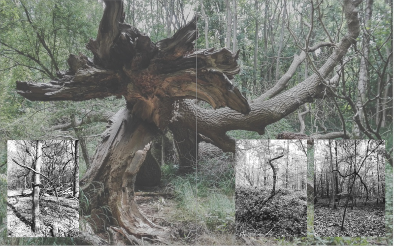 Maga Esberg Art work featuring a tree