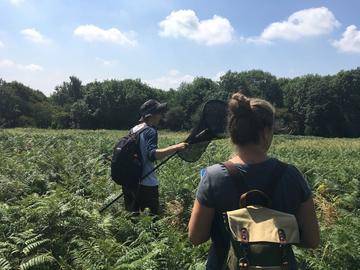 Two people walking through a green meadow with a net and backpacks