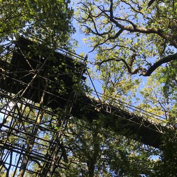 Canopy walkway as seen from the ground