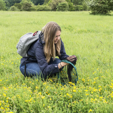 Person crouching looking for Bees in a green meadow